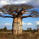 Můj příběh s baobabem