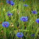 Zahrady a louky jsou plné bylin, sbírejme!