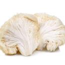 Korálovec ježatý Vám poleze na nervy a jen tak jej nestrávíte