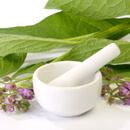 Fytoterapie – uzdravující bylinky
