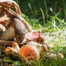 Medicinální houby