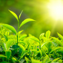 Jarní léčivé rostliny