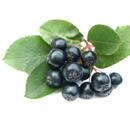 Černá jeřabina (arónie černoplodá) – malá vitaminová bomba