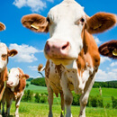 Bioseriál 3 – Živočišná produkce vs. BIO