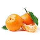 Mandarinka (Citrus reticulata)