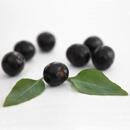 Maqui – nejsilnější antioxidant