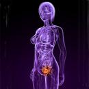 Akutní zánět močového měchýře z pohledu celostní medicíny
