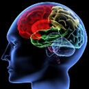 Výživa z přírody pro náš mozek
