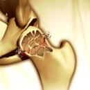 5 tipů, jak bojovat s osteoporózou: Vápník doplní ryby, od bolesti uleví smrk a túje