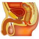 Test IPSS – jak je na tom Vaše prostata