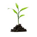 Divoce rostoucí byliny jako úžasný zdroj vitamínů a minerálních látek