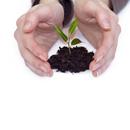 Léčivé rostliny jako diuretika