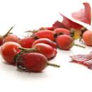 Šípková růže a její léčivý plod