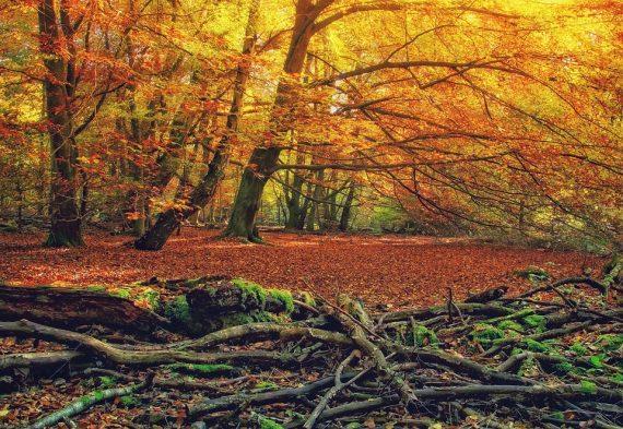 Uzdravující síla stromů