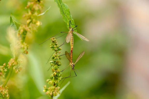 Rostlinné repelenty (příklady léčivých rostlin odpuzujících hmyz)