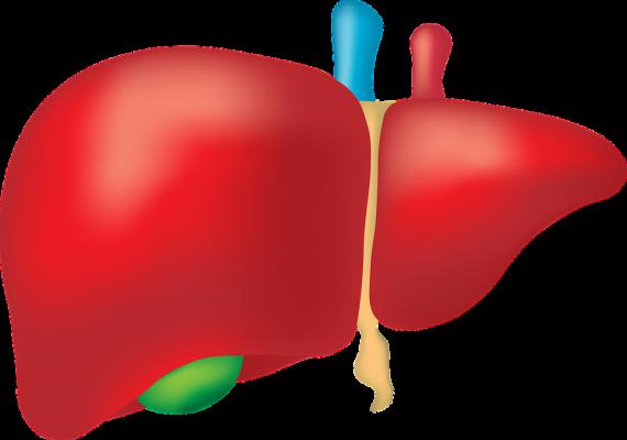 Chronické nemoci a funkce jater