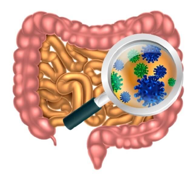 Lidský mikrobiom a jeho efektivní ovlivňování prebiotickou stravou